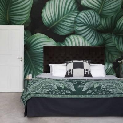дизайнерские обои гигантские листья калатеи
