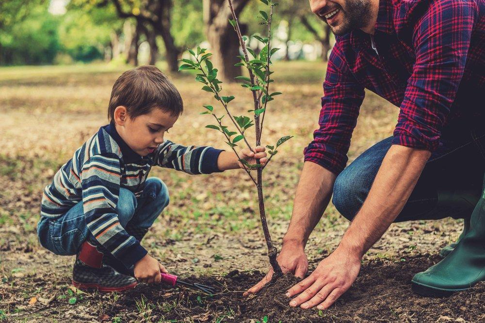 PLANT JE BOOM Of je nu in de stad woont of op de boerenbuiten, onze bomen kunnen zowel in een pot op je terras als in je tuin geplant worden.