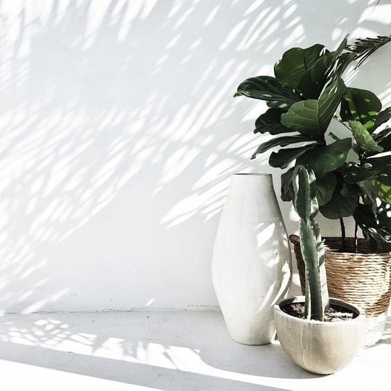 Relaxed outdoor style . . . . . #outdoor #sun #light #shadows #plants #pots #planters #design #style #interiordesign