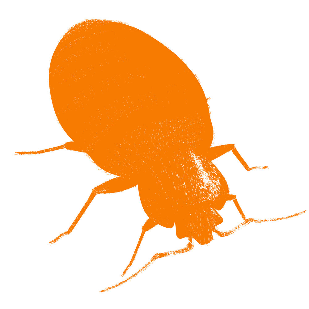 Steam is an important element of our four-part bed bug control treatment. We're the smart new Bed bug exterminator Toronto has been waiting for.
