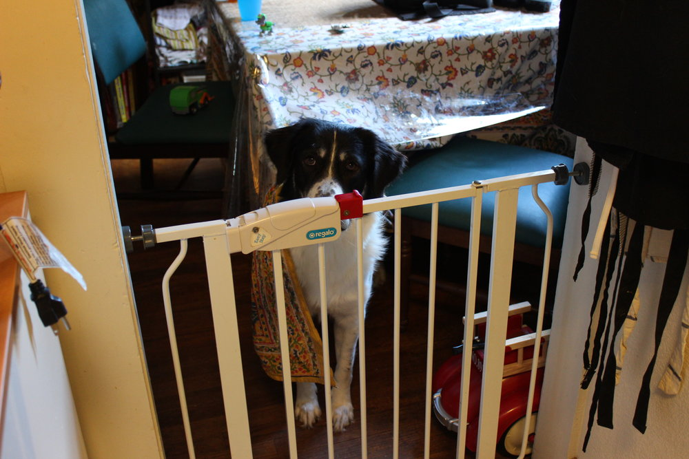 Sheila girl was quite sad that she did not get promoted to kitchen helper during the cooking process. For cleaning, however, we leave the gate open and just don't ask too many questions