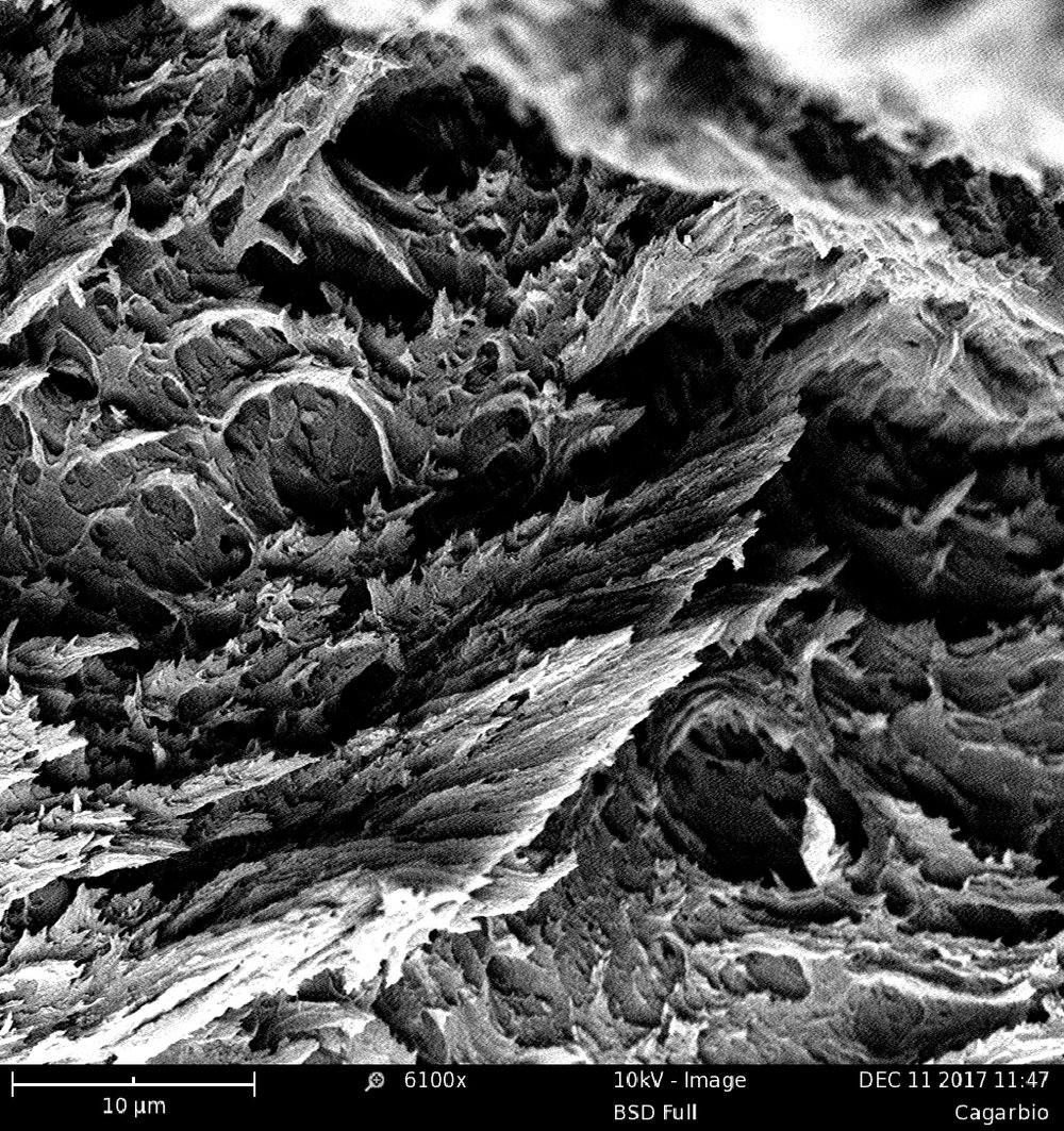 McCurdy_Charlotte_After Ancient Sunlight_4 Collaborating with Scientists SEM of Algae Plastic - Charlotte McCurdy.jpg