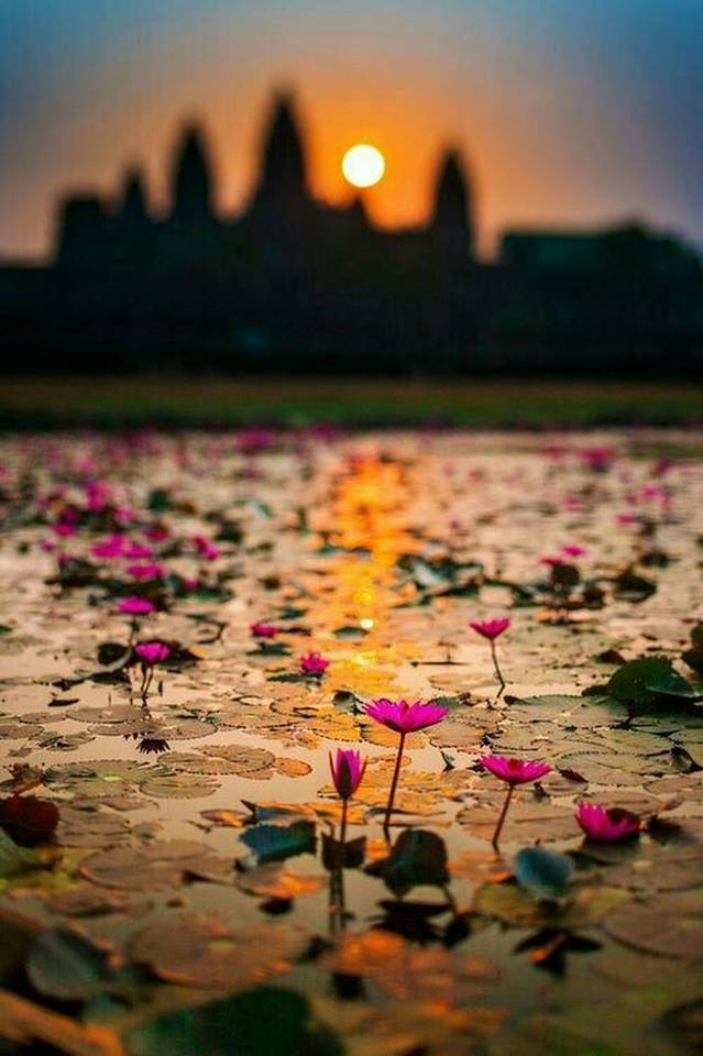 lotus_vietnam.jpg