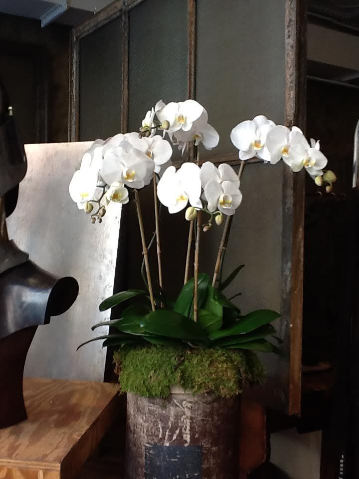 Florealpuc_home1.jpg