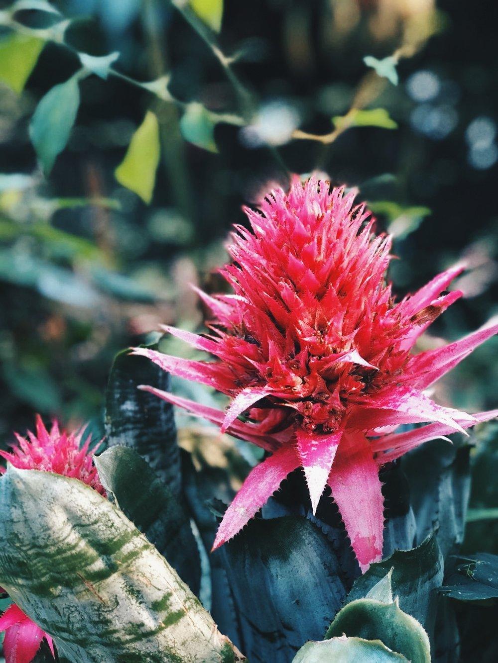Pics from The Botanics