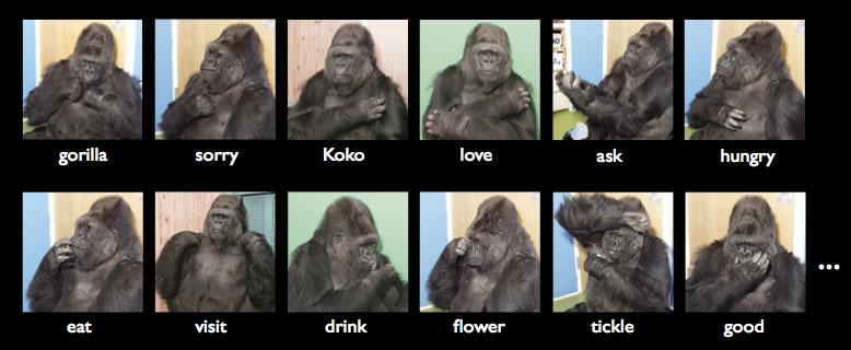 koko_signs1.jpg