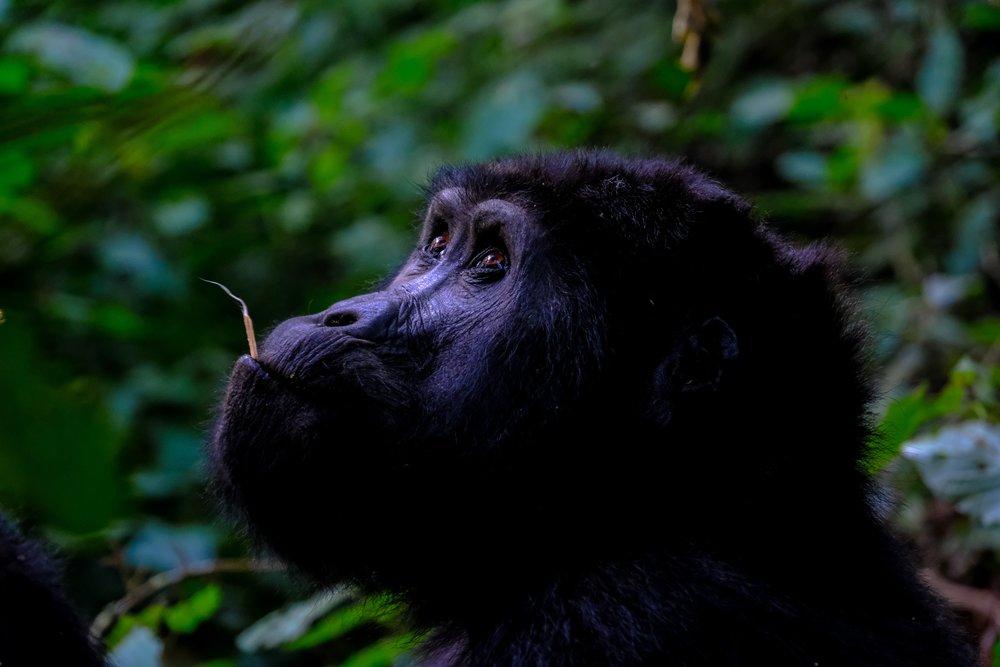 animal-animal-photography-ape-1238275.jpg
