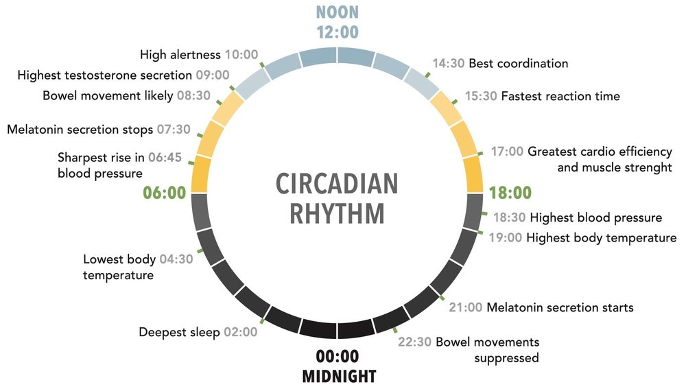 Diagram of the circadian rhythm. Illustration via Donald M. Rattner, Architect. From the book  Your Creative Haven  by Donald M. Rattner (Skyhorse Publishing, 2019).
