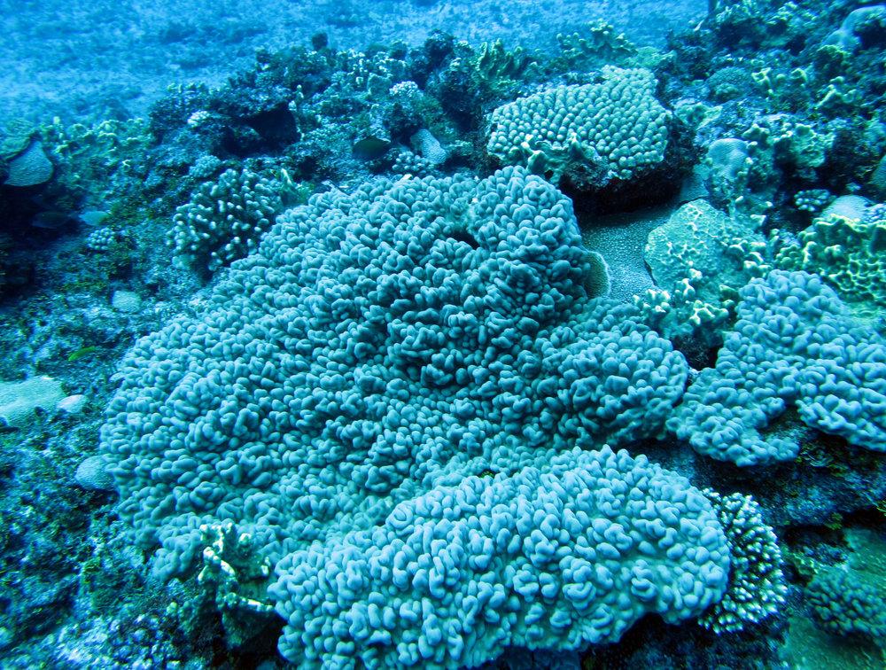 coral garden.jpg