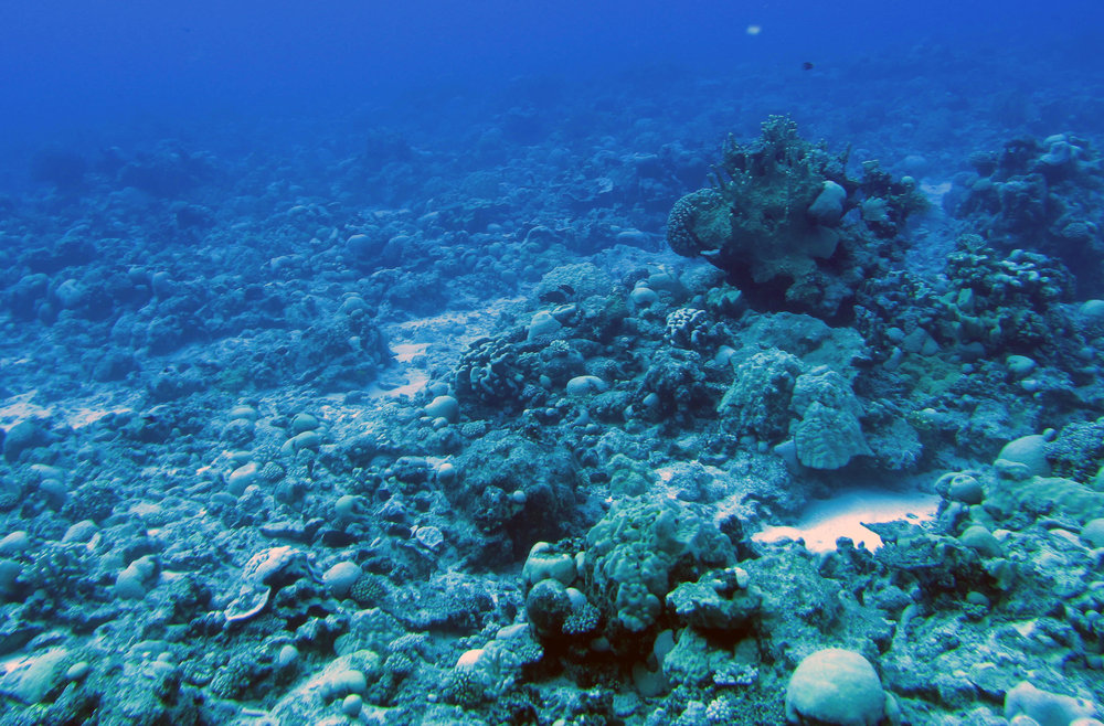 1st dive of 4-12-13.jpg