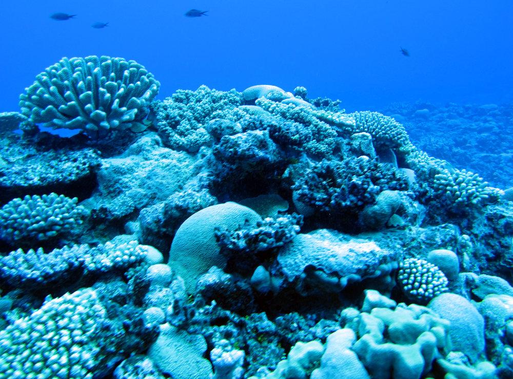 coral hill.jpg