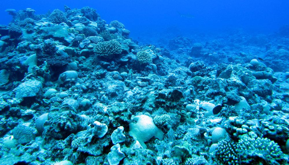 underwater Raivavae.jpg
