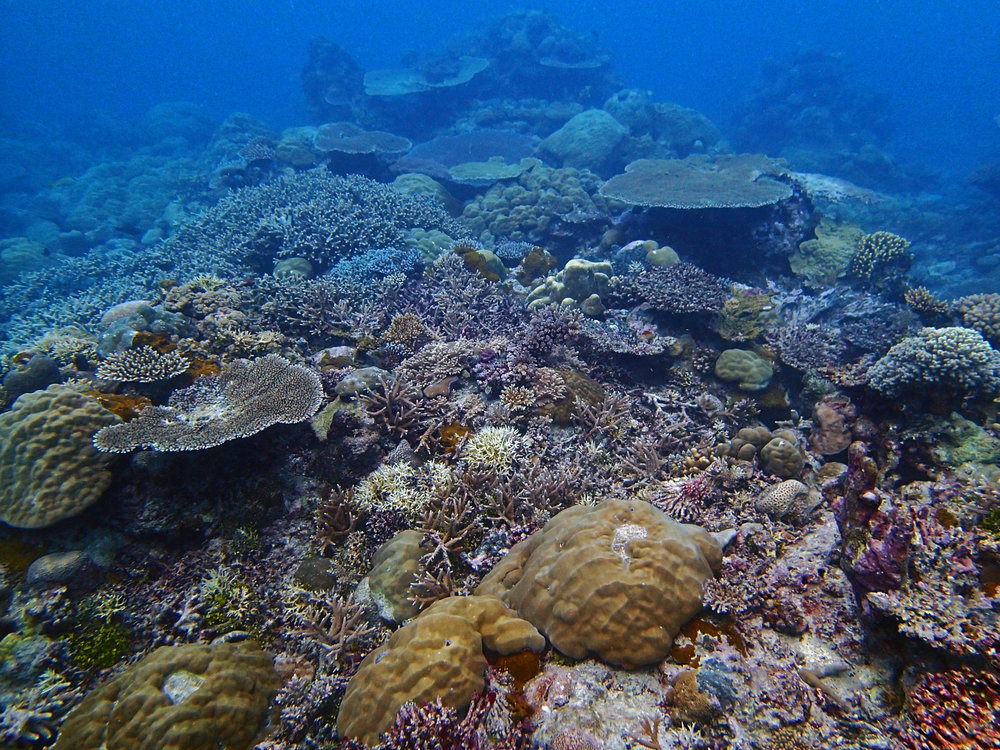 Palau  (Jan. 2015). I have processed my samples but not yet analyzed the data. A popular science write-up of our work in Palau can be found  here .