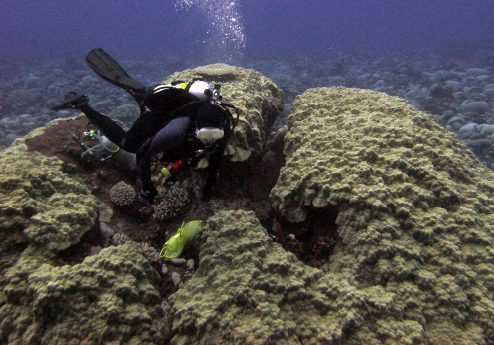 Renee and massive Porites.jpg