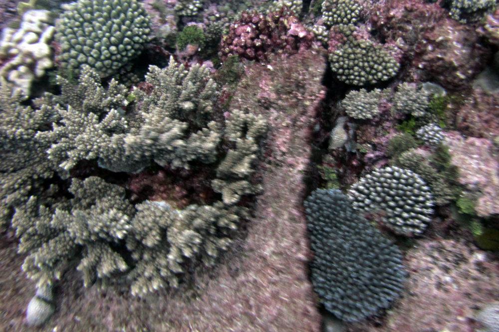 corals 4-16-13.jpg