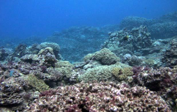 COTS-ravaged reef.jpg
