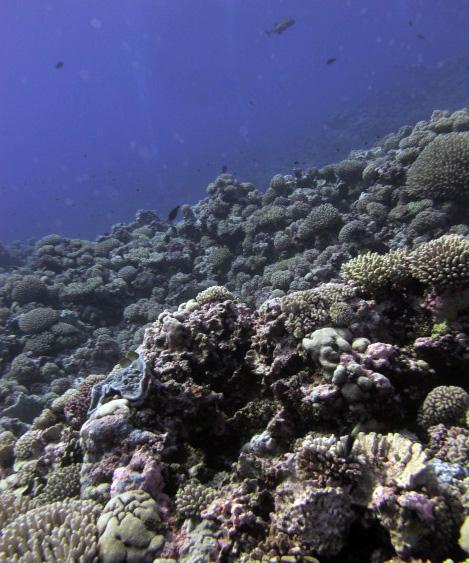 reefs never seen by humans.jpg