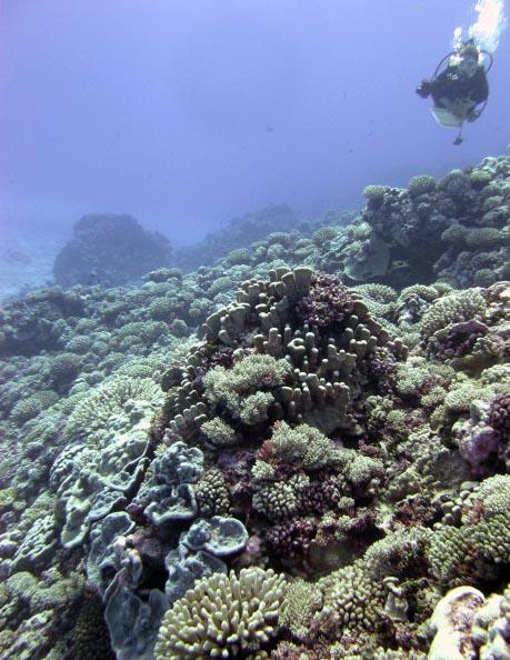sunny reef.jpg