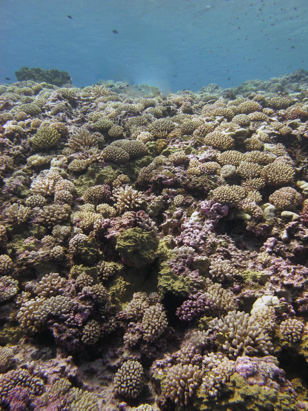 coral mountain.jpg