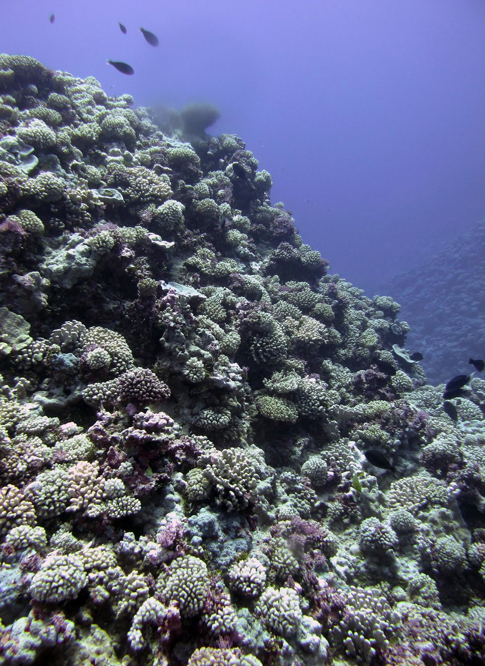 well developed reef.jpg