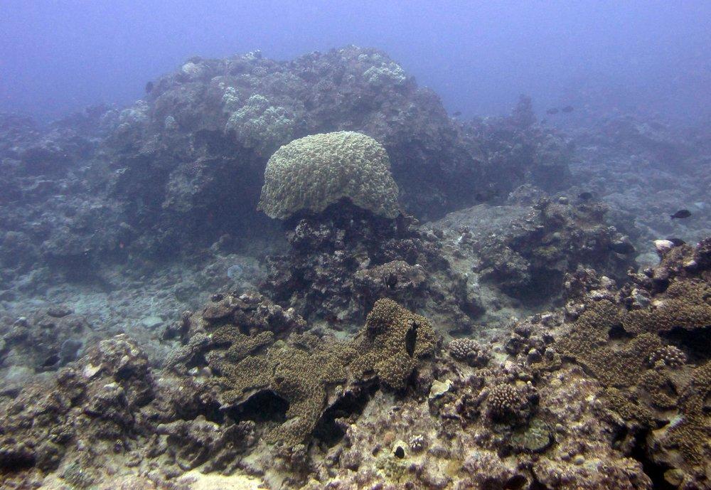CIRR04 Rarotonga.jpg