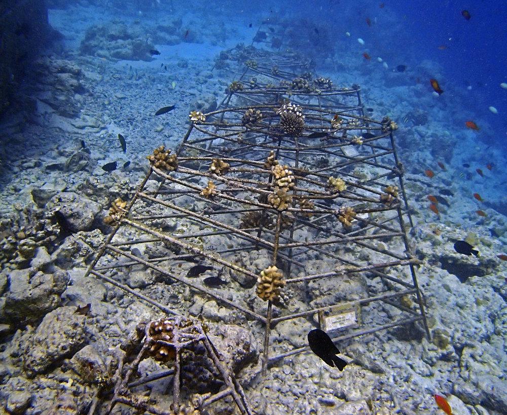 coral culture.jpg
