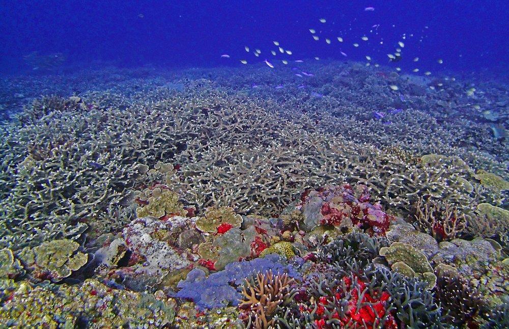90% cover Palau.jpg