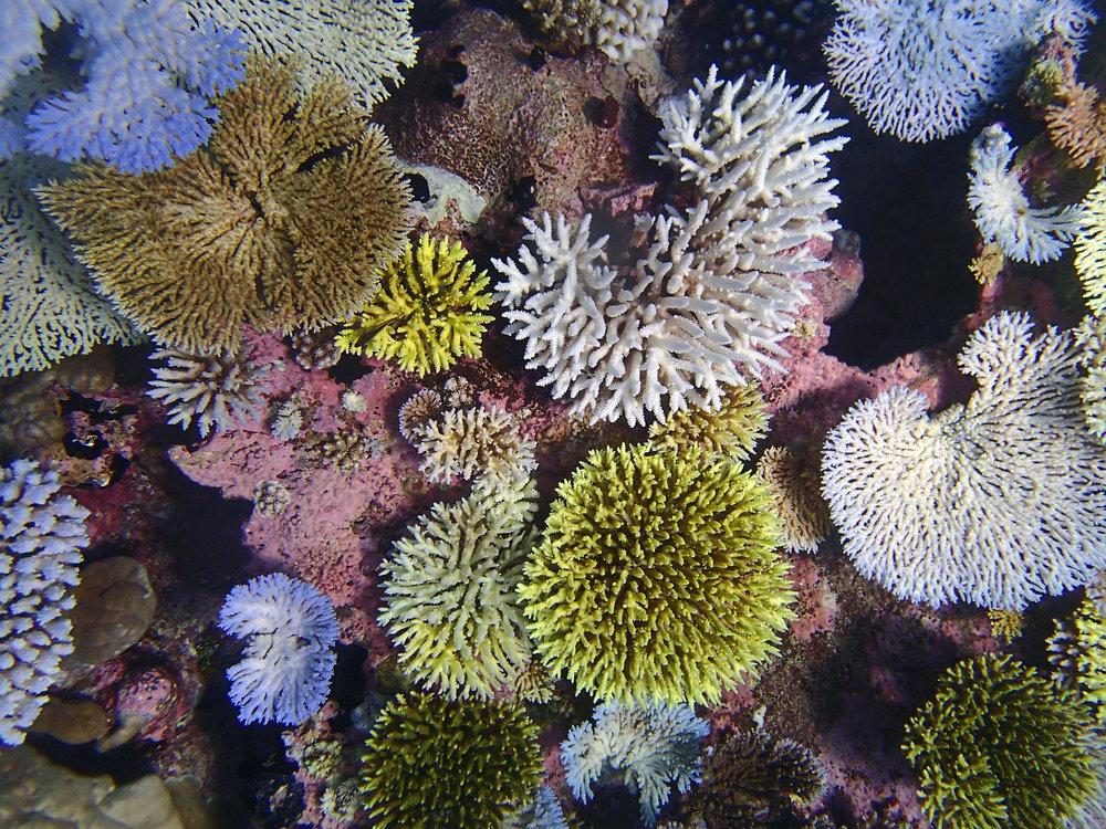 coraleidoscope.jpg