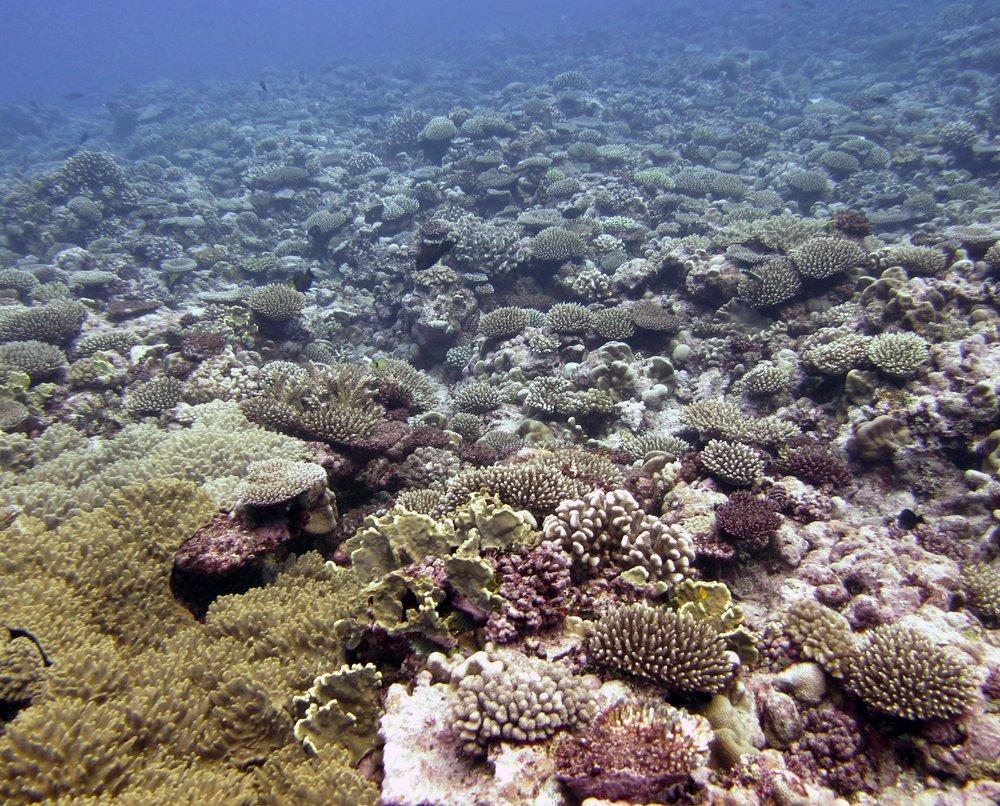pre-COTS reef.jpg
