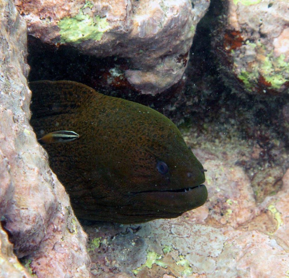good eel closeup.jpg