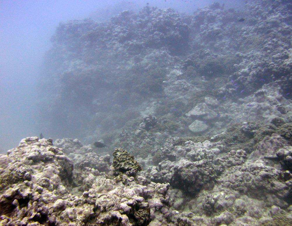 weird murky water.jpg