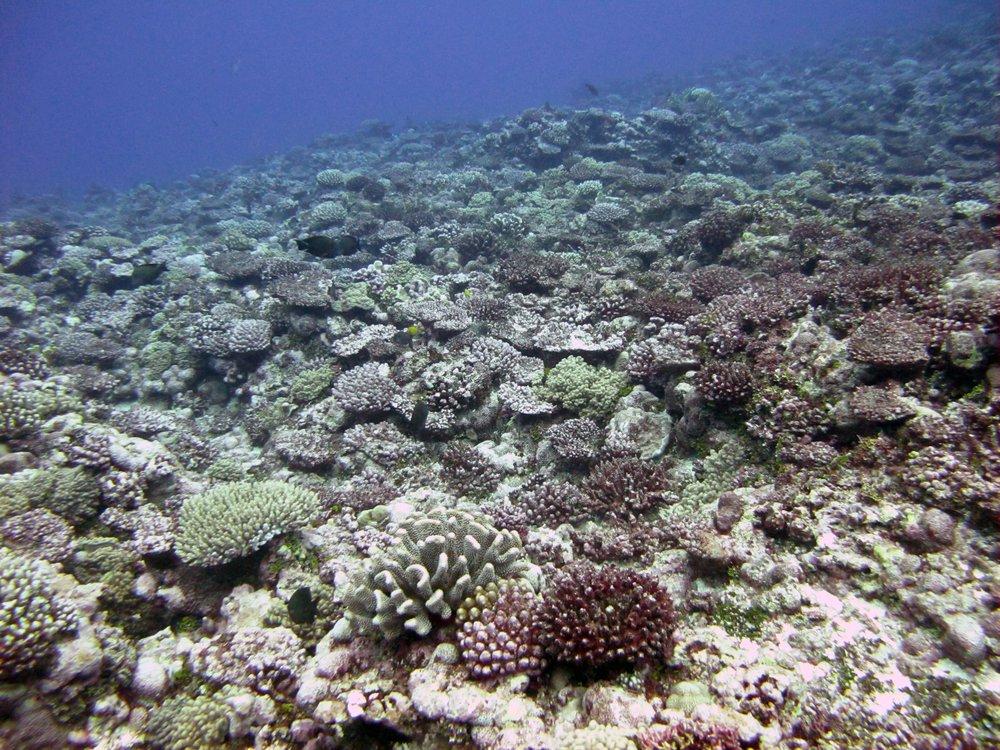 half dead reef.jpg