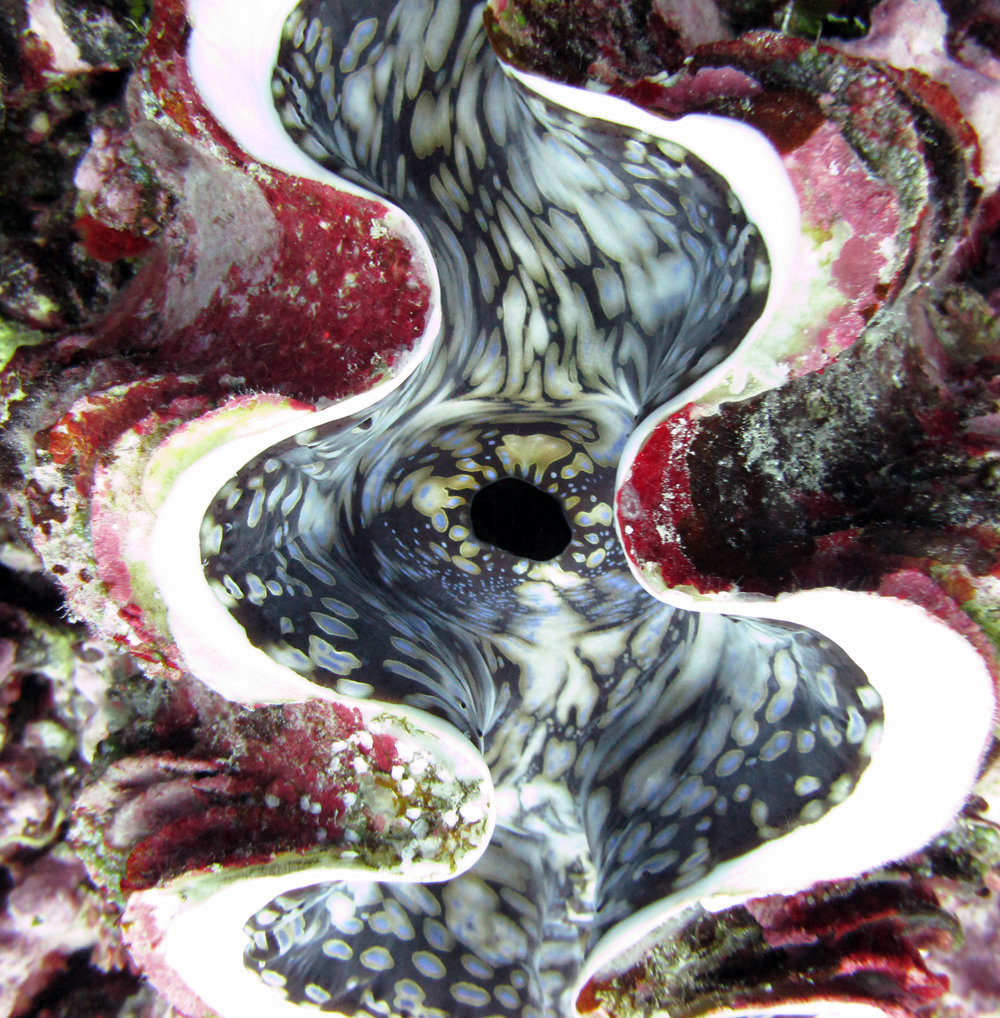 cool clam shot.jpg