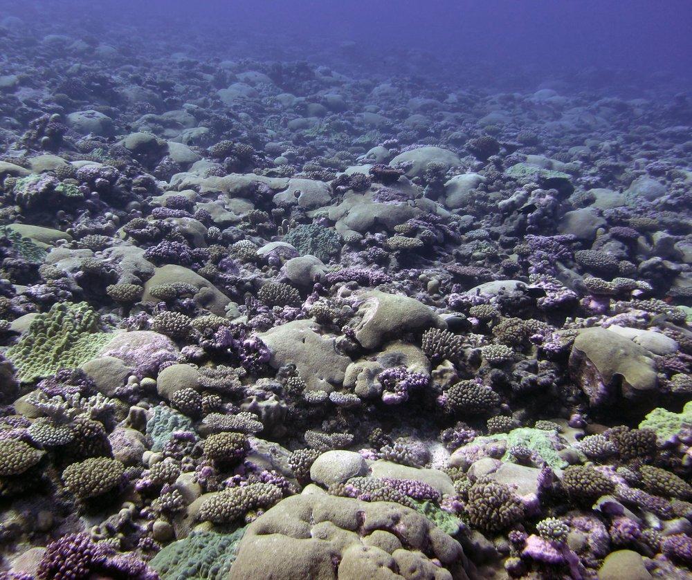 coralandia.jpg