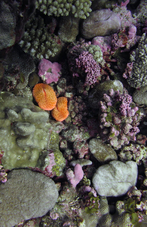 bright orange fungids.jpg