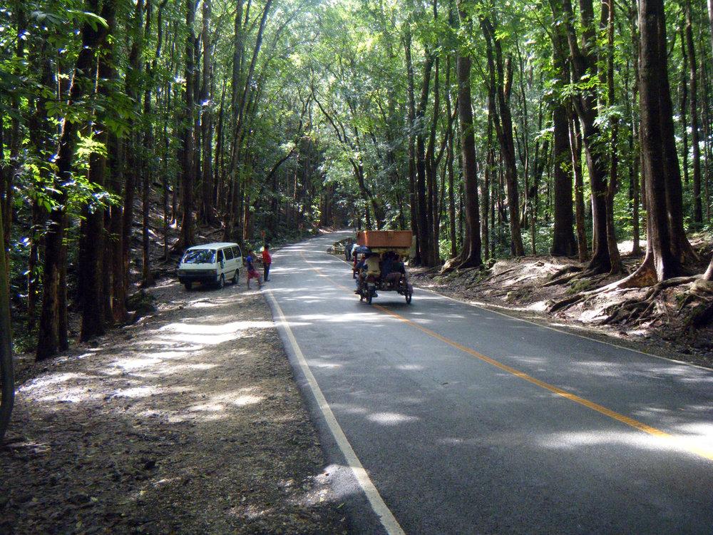 forests of Bohol.jpg