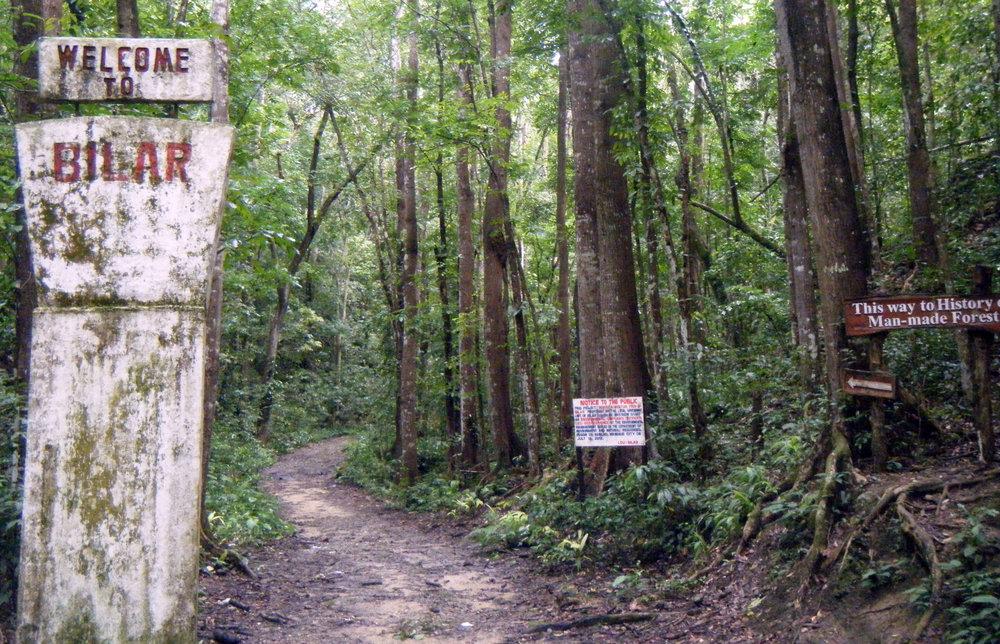 Mahogany forest.jpg