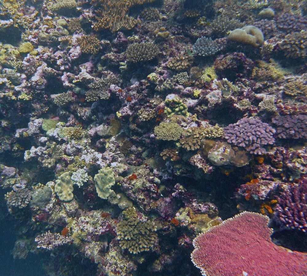 coral wall.jpg