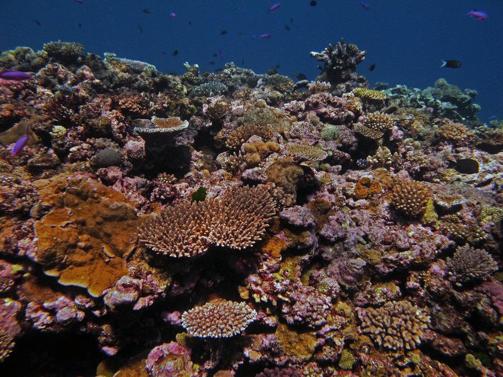 stunning reef.jpg