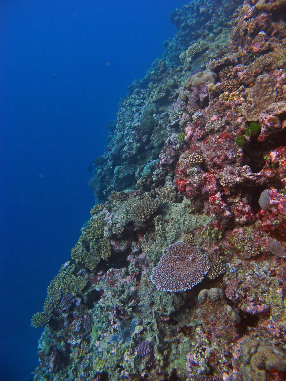 corals of Fiji.jpg