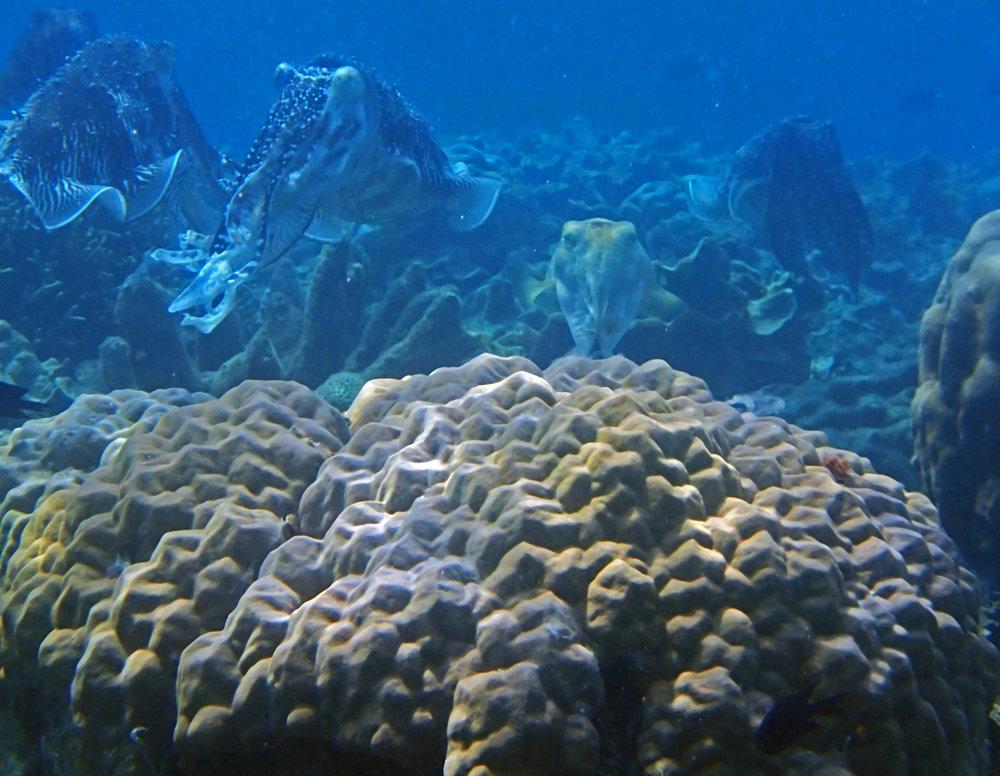 monster cuttlefish.jpg