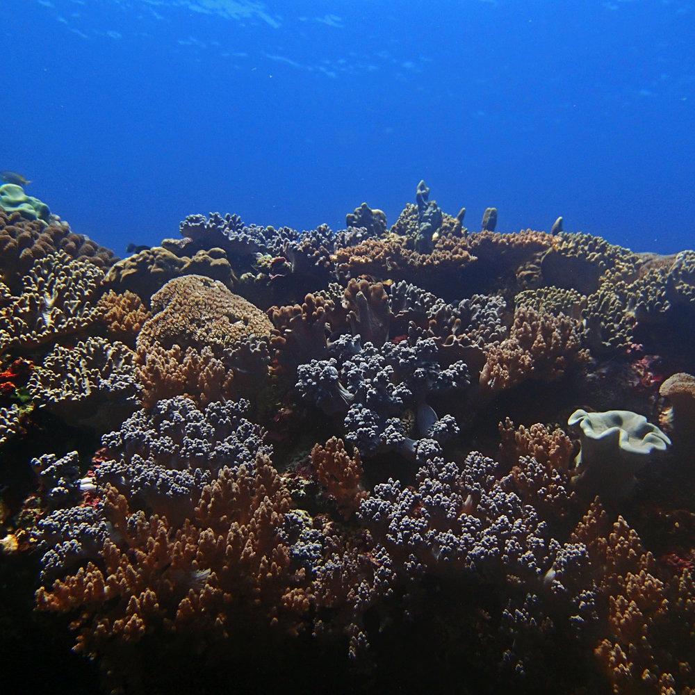 soft corals of Dongsha.jpg