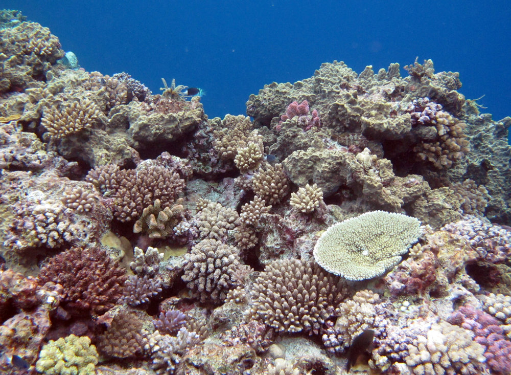 corals everywhere.jpg