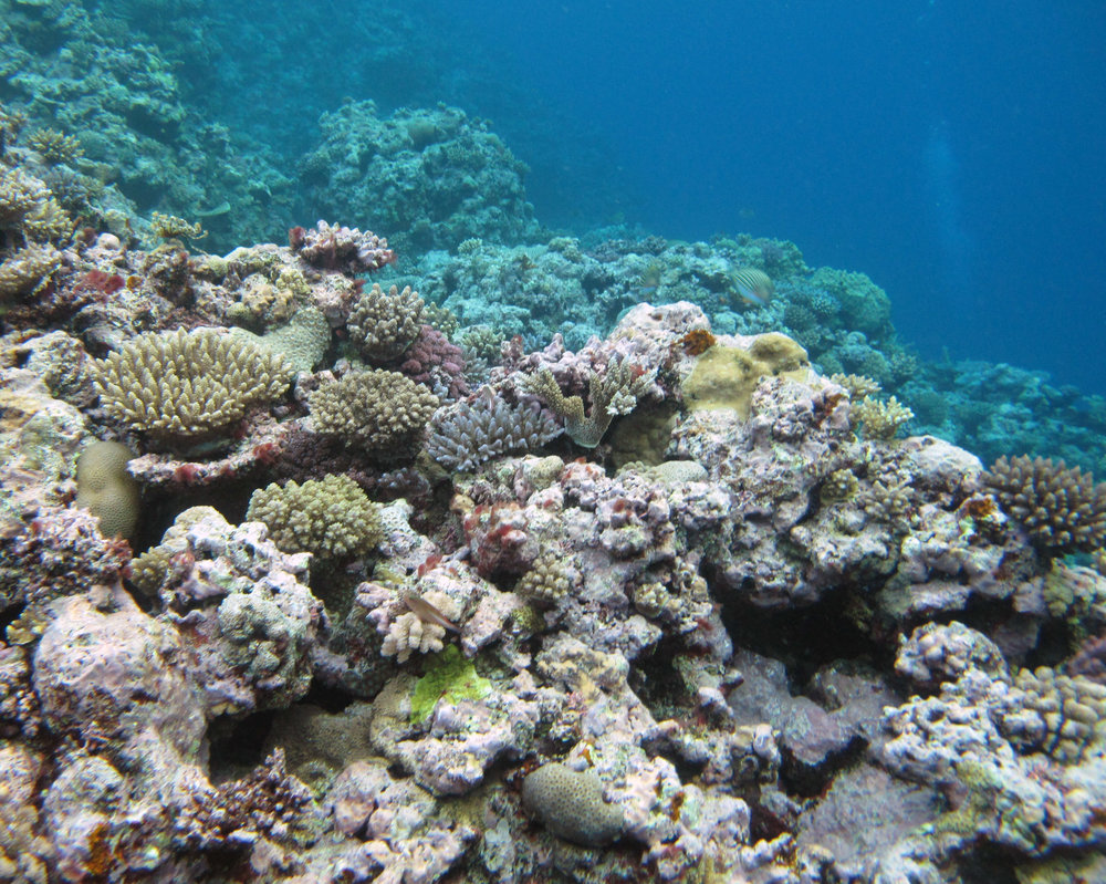 coral ridge.jpg