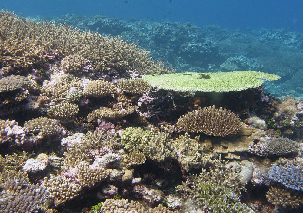 impressive coral cover.jpg