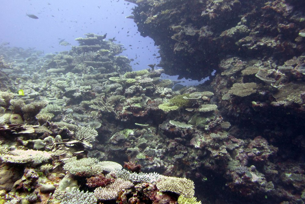 first dive at Cicia.jpg