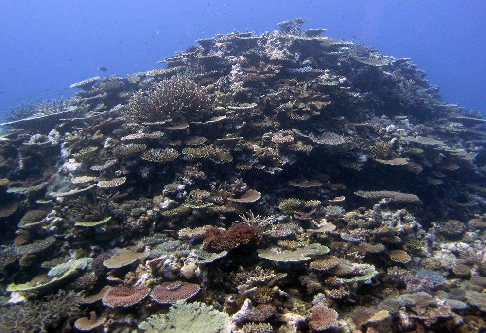 coral mountain FJCC45.jpg