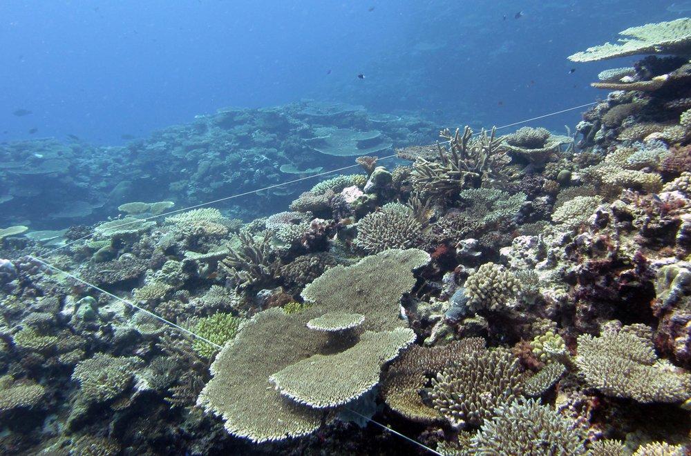 Joao's coral tethers.jpg