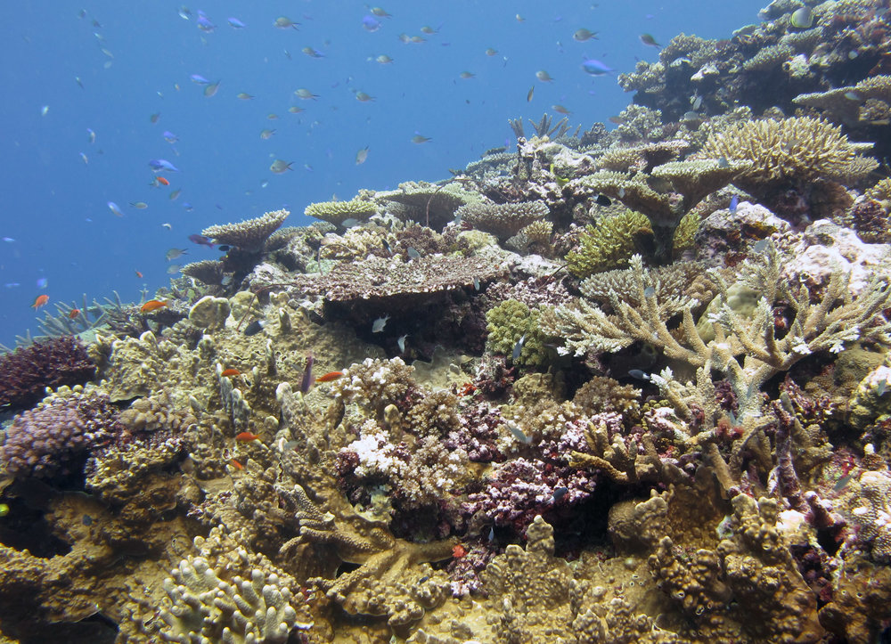 reef covered by fish.jpg