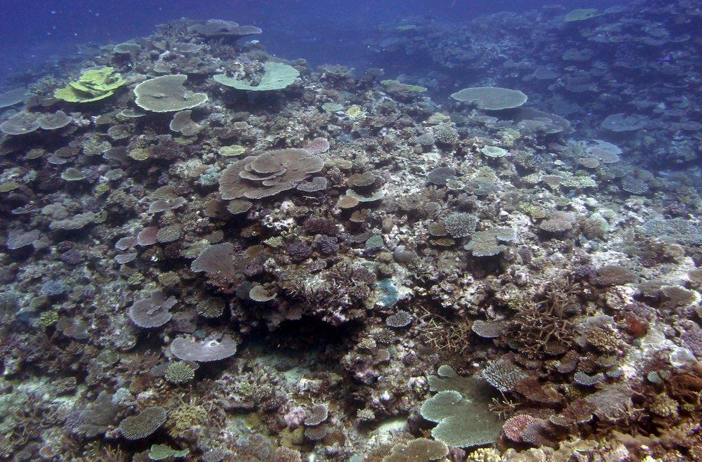 spectacular reefs.jpg
